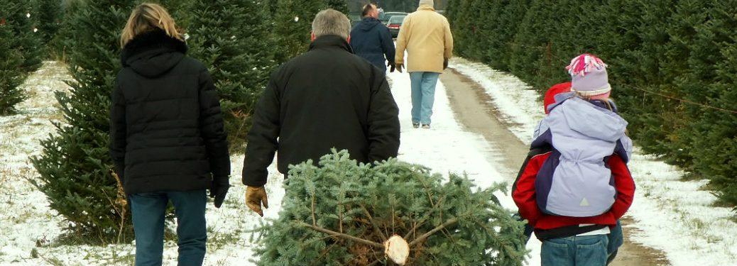 Christmas Tree Farms in Manitoba near Portage La Prairie