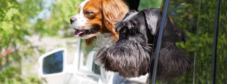 What can I do if I see a dog in a car this summer?