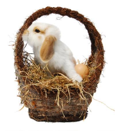 Cute white and brown rabbit in a wicker basket