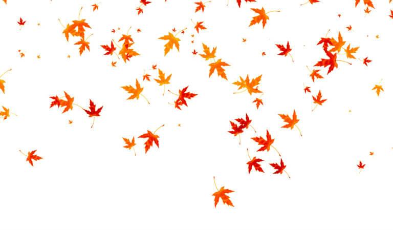 Fall foliage Portage la Prairie