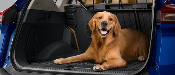 A golden retriever in the back of a blue Nissan Rogue.